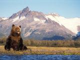 Brown Bear with Salmon Catch, Katmai National Park, Alaskan Peninsula, USA Photographic Print by Steve Kazlowski