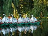 Swan Boats in Public Garden, Boston, Massachusetts Photographic Print by Lisa S. Engelbrecht