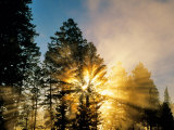 God Rays from Morning Fog Along the Madison River, Yellowstone National Park, Wyoming, USA Photographic Print by Chuck Haney
