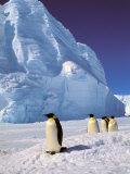 Emperor Penguins, Cape Darnley, Australian Antarctic Territory, Antarctica Fotografisk tryk af Pete Oxford