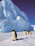 Emperor Penguins, Cape Darnley, Australian Antarctic Territory, Antarctica Photographic Print by Pete Oxford