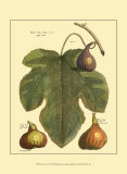Fig Leaf II Posters por  Langley