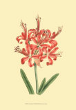 Le Fleur Rouge I Prints by Sydenham Teast Edwards