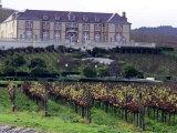 Chardonnay and Pinot Noir Grape Vineyards Photographic Print by Eric Risberg