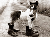 Adult Horse with Giant Boots Premium Photographic Print