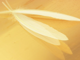 White Feathers on Yellow Background Fotoprint