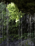 Dripping Water at Grotto Falls, Montana Photographic Print by Ryan Ross