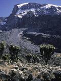 Desert Landscape with Mountain View, Kilimanjaro Reproduction photographique par Michael Brown