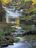 Autumn Color on Stream, Trout Lake, Washington, USA Fotoprint av William Sutton