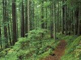 Pfad durch den Wald, Silver Falls, Mount Rainier-Nationalpark, Washington, USA Fotografie-Druck von Jamie & Judy Wild