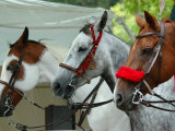 Horses Paraded Before the Race, Saratoga Springs, New York, USA Stampa fotografica di Lisa S. Engelbrecht