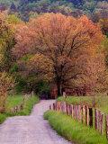 Sparks Lane, Cades Cove, Great Smoky Mountains National Park, Tennessee, USA Fotografisk trykk av Adam Jones