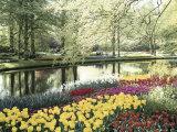 Keukenhof Gardens, Lissa, Netherlands Lámina fotográfica