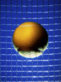 Ball Against Racquet Photographic Print