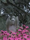 Bonaventure Cemetery, Savannah, Georgia, USA Valokuvavedos tekijänä Joanne Wells