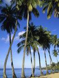 Ste-Luce, Martinique Lámina fotográfica