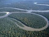 Amazon River, Amazon Jungle, Brazil Photographic Print