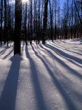 Snow in the Northern Hardwood Forest, Maine, USA Impressão fotográfica por Jerry & Marcy Monkman