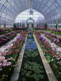 Como Park Conservatory, St. Paul, Minnesota, USA Lámina fotográfica