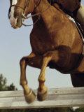 Jockey And a Horse Jumping Over a Hurdle Lámina fotográfica