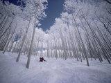 Suksilla puiden lomassa Valokuvavedos