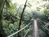 Sky Walk, Monteverde Cloud Forest, Costa Rica Fotografie-Druck von Michele Westmorland