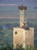 Tower With Birds and Bird Nests, Morocco Photographic Print by John & Lisa Merrill