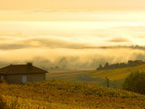 Autumn Morning Fog in Pouilly-Fuisse Vineyards, France Photographic Print by Lisa S. Engelbrecht