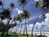 View of Manzanilla Bay, Port of Spain, Trinidad, Caribbean Fotografisk trykk av Greg Johnston
