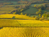 Autumn Morning in Pouilly-Fuisse Vineyards, France Stampa fotografica di Lisa S. Engelbrecht