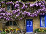 Cottage with Wisteria in Flower, Broadway, United Kingdom Fotografie-Druck von Barbara Van Zanten