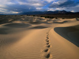 Footprints in Mesquite Sand Dunes, Death Valley National Park, USA 写真プリント : キャロル・ポリッシュ