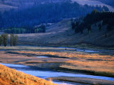 Lamar River Valley with Bison Crossing in Distance, Yellowstone National Park, U.S.A. Fotografisk tryk af Christer Fredriksson