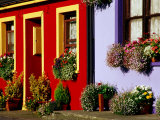 Cottage Facades Decorated with Flowers, Eyeries, Ireland Fotoprint van Richard Cummins