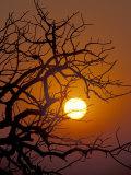 Savannah Sunset, Zimbabwe Fotoprint av William Sutton