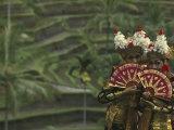 Legong Dancers, Bali, Indonesia Reproduction photographique par Michele Westmorland