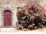 Door and Pink Oleander Flowers, Lucardo, Tuscany, Italy Photographic Print by Michele Molinari