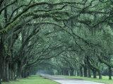Historic Wormsloe Plantation, Savannah, Georgia, USA Reproduction photographique par Joanne Wells