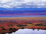 Two Moose in a Pond with Fall Tundra, Denali National Park, Alaska, USA Photographic Print by Charles Sleicher