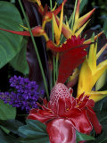 Colorful Tropical Flowers, Hawaii, USA Impressão fotográfica premium por John & Lisa Merrill