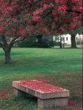 Crab Apple Trees in Prescott Park, New Hampshire, USA Impressão fotográfica por Jerry & Marcy Monkman