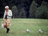Grayleg Geese Follow Austrian Ethologist Konrad Lorenz who Taught them to Accept Him as its Mother Lámina fotográfica prémium por Nina Leen