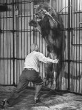 Animal Trainer Jules Jacot Training a Lion, one of the 21 big cats He Will Use Next Year Photographic Print by Wallace Kirkland