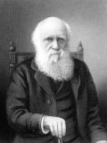 Engraving of British Naturalist Charles Darwin Developed Theory of Evolution by Natural Selection Stampa fotografica Premium