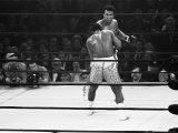 Joe Frazier Vs. Mohammed Ali at Madison Square Garden Premium Photographic Print by John Shearer