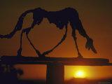 Il cane Stampa fotografica di Alberto Giacometti