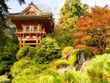 Japanese Tea Garden, Golden Gate Park, San Francisco, California, USA Fotografie-Druck von Michele Westmorland