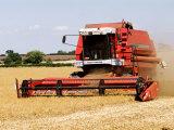 Combine Harvester Harvesting Crop, England Fotografisk tryk af Martin Page
