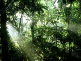 Tropical Rainforest, Panama Fotografie-Druck von John Brown
