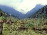 Path Across Upper Bigo Bog Towards Maln Mts, Rwenzori Mountains, Uganda Reproduction photographique par Michael Brown